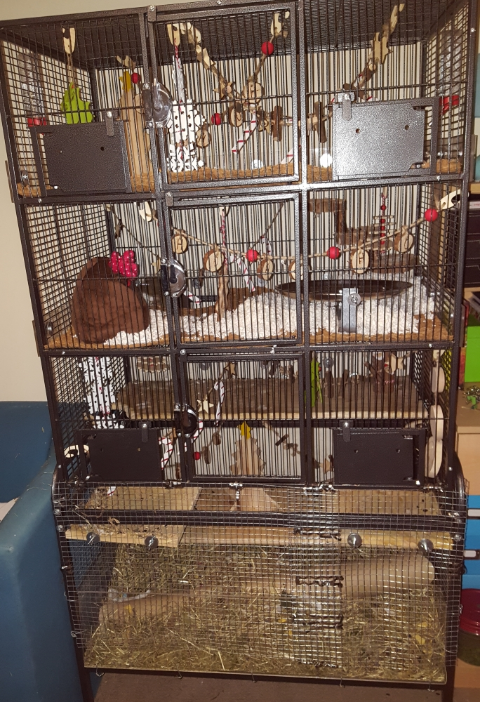 We also finally finished the cage extension. The bottom two levels were actually just a storage part before so now they have around 60% extra space to explore whilst in the cage and they love it. So much they hardly come out when we let them anymore!